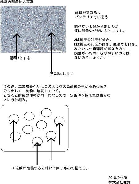 酵母の中身.jpg